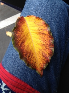 A leaf, on my pants